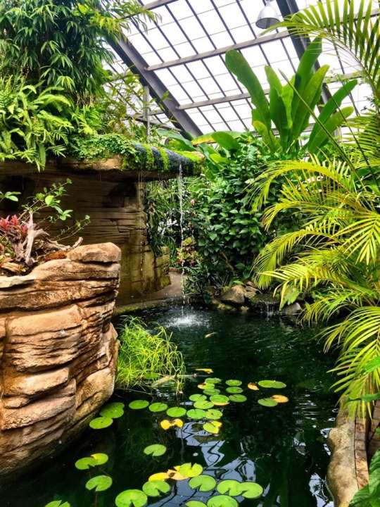 Garfield Park Conservatory And Sunken Gardens Provides Tropical Rainforest Getaway Just Minutes From Downtown Wttv Cbs4indy