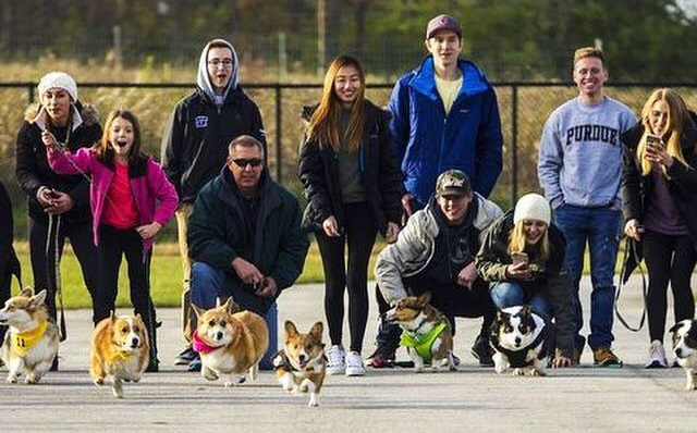 Corgi Races Human Mario Kart Tricycle Races And Safe Trick Or Treat Events Make For Fun Halloween Weekend Wttv Cbs4indy