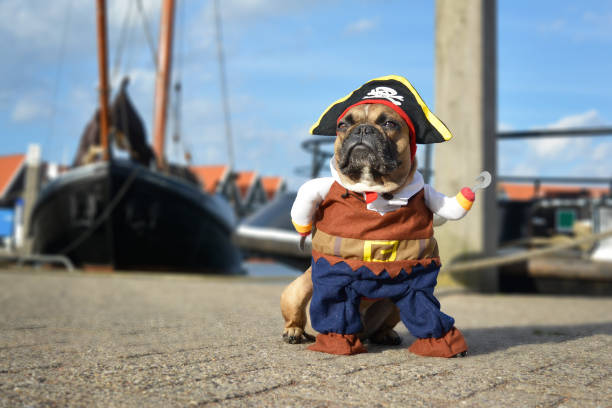 Pet Costume Safety